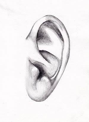 рисунок ухо: