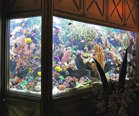 b Морской аквариум /b и его особенности.