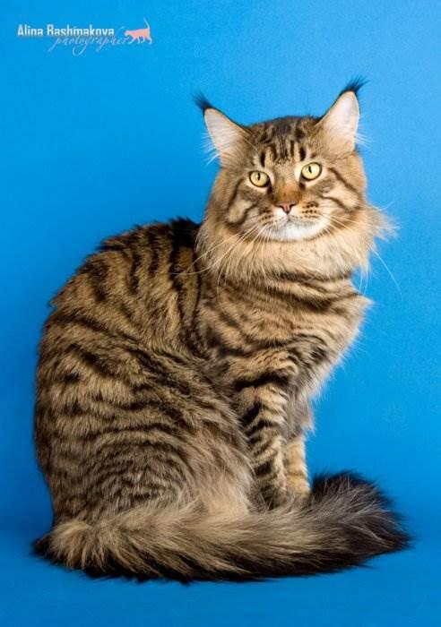 Беспородные кошки фото 5.