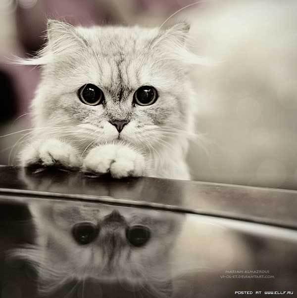 Кошки просто красивые кошки 9