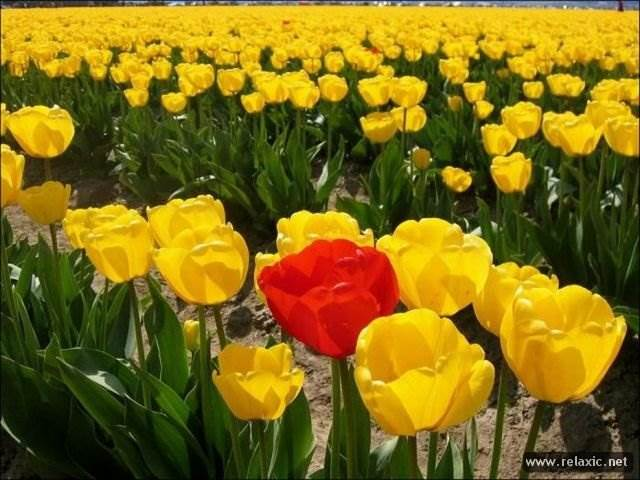 Красивые цветы фото