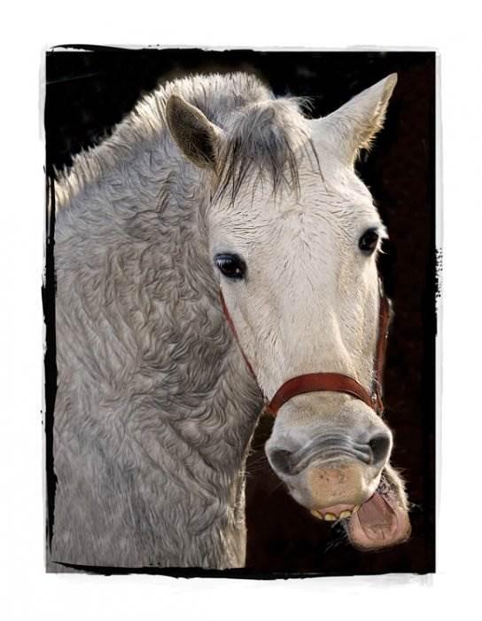лошадь из модулей оригами