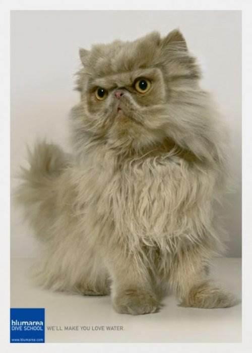 Кошки герои рекламы 40 фото
