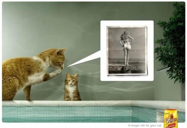 Кошки из рекламы