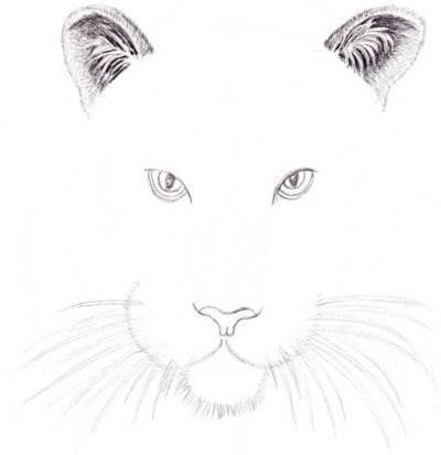 как рисовать тигра поэтапно