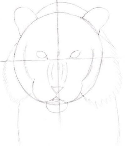 как рисовать тигра карандашом