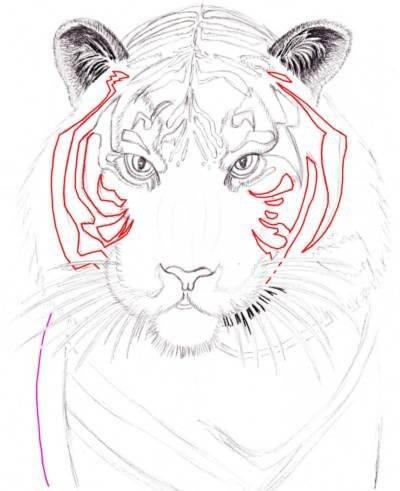 учимся рисовать тигра
