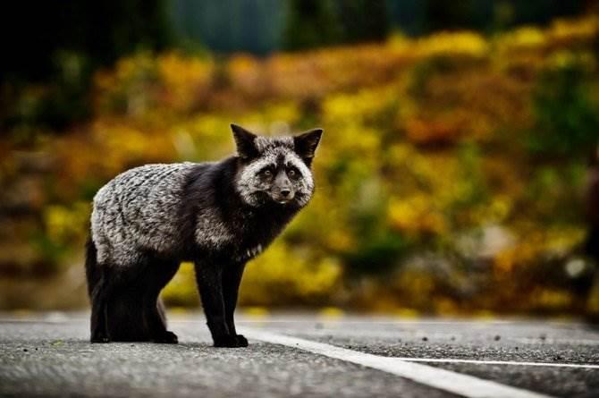 В мире животных Mukul Soman