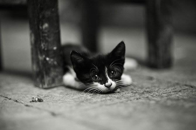 Александр Кан - кошки Стамбула