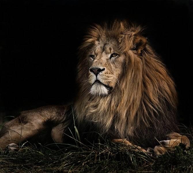 В дикой природе фото Sue Demetriou