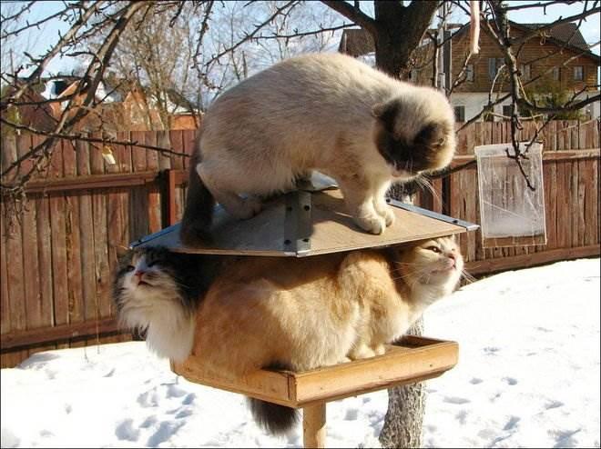 Смешные котэ фото
