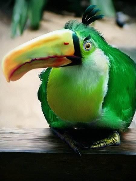 Живые Angry Birds
