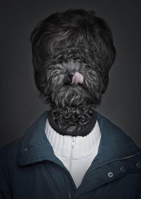 собаки в роли людей