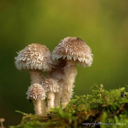 Красивые фото грибов