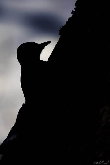 Фотограф птиц