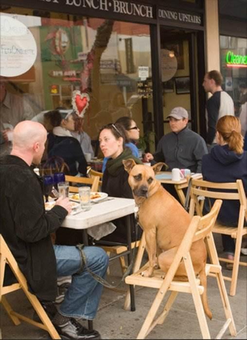 Сан-Франциско собаки