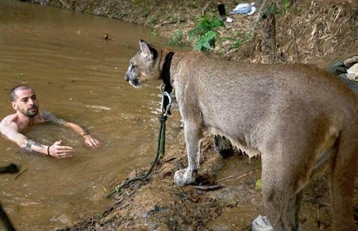 Диких животных в боливии фото