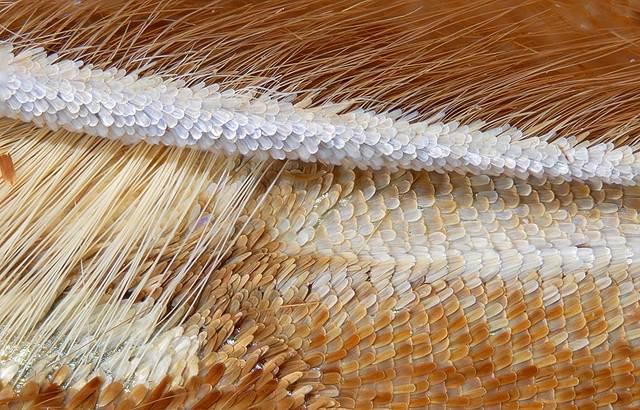 Макрофотография крыльев бабочек