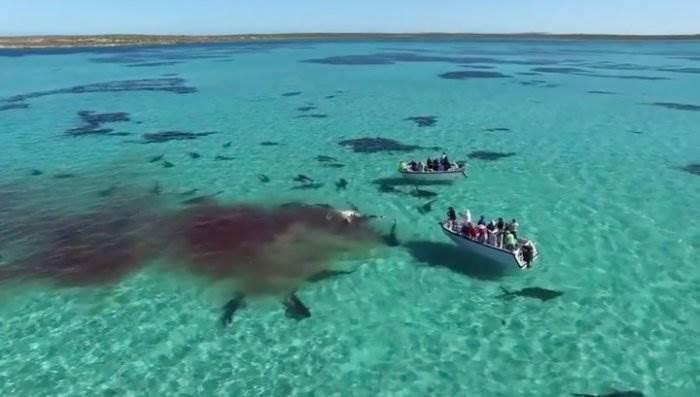 Акулы растерзали кита фото