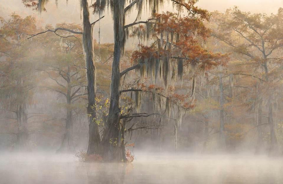 Захватывающие фотографии природы на конкурсе «Пейзажный фотограф года» 2019 Фотографы мира