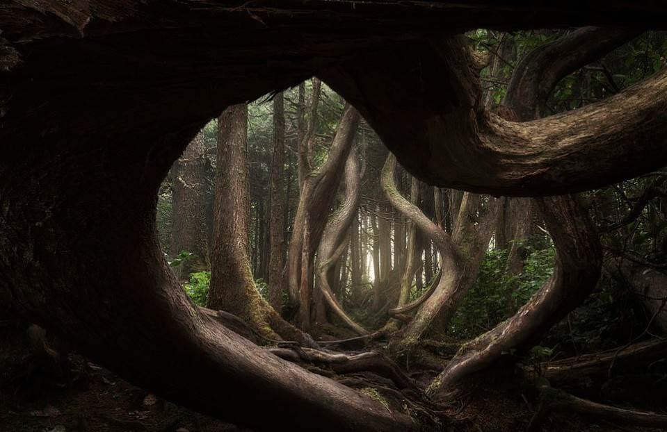 Захватывающие фотографии природы на конкурсе «Пейзажный фотограф года» 2019