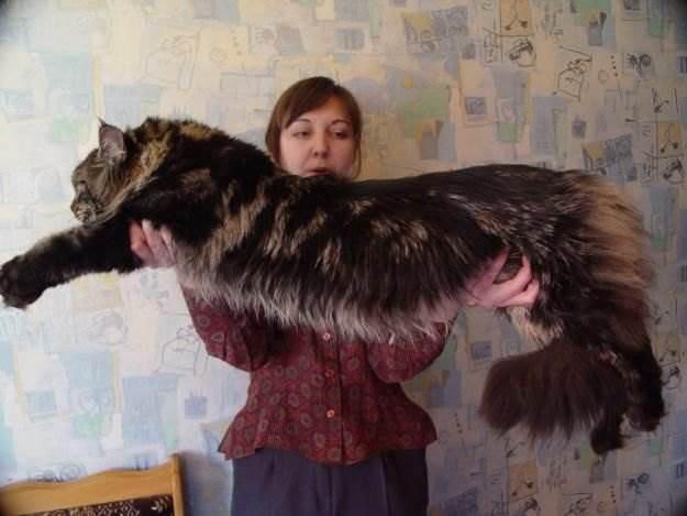 Самые красивые кошки фото