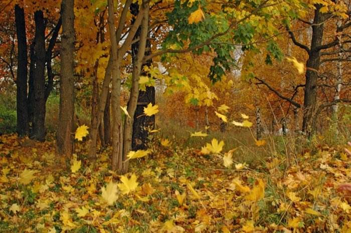 Значение листопада