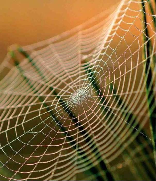 Сеть паук картинка