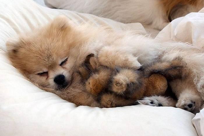 Картинки щенки милые и красивые спящие цель праздника