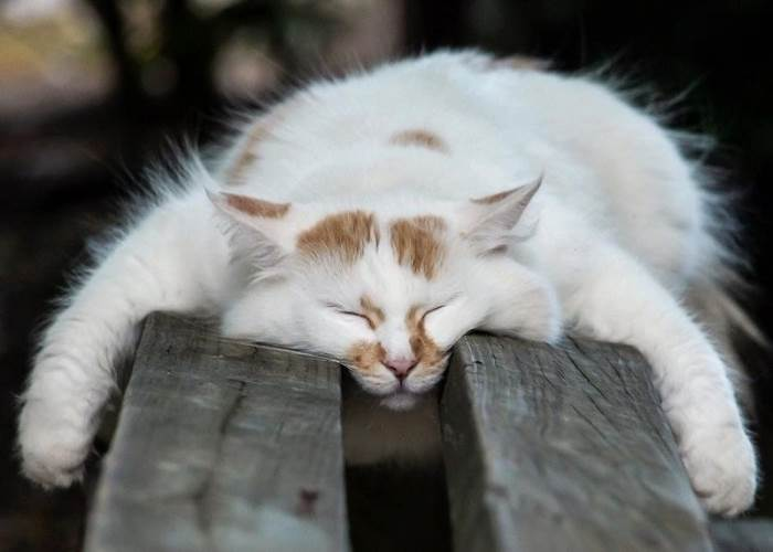 Смешные картинки кошек спящих