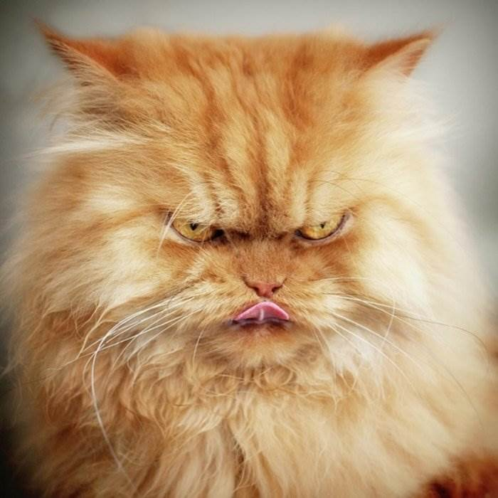 холодильник логотипом вредная кошка картинки или