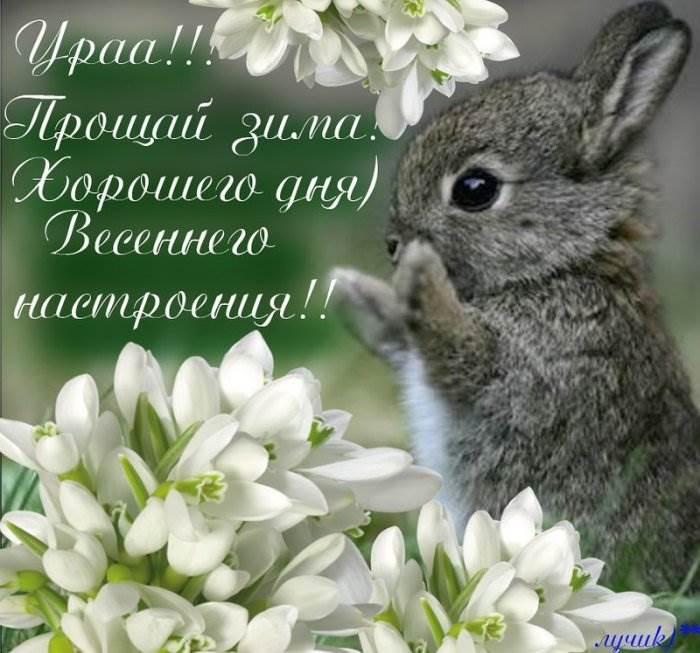 Поздравление с 1 днем весны картинки прикольные, открытки днем рождения