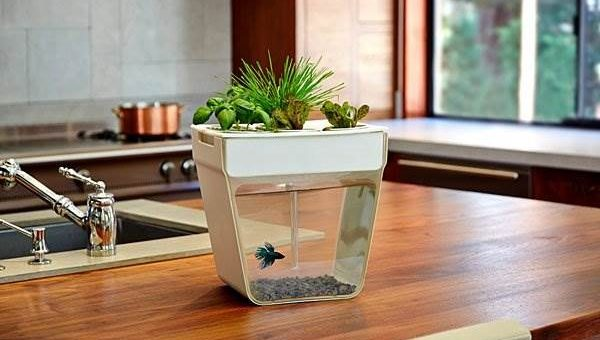 Аква-ферма (аквариум + цветочный горшок) уникальная система