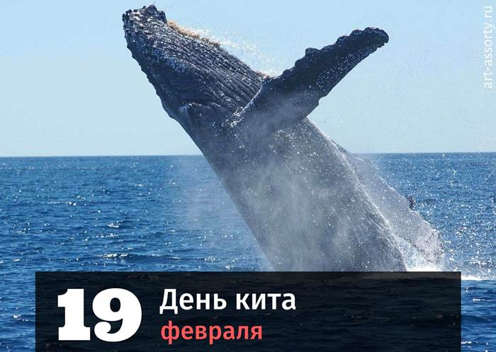 День кита картинка