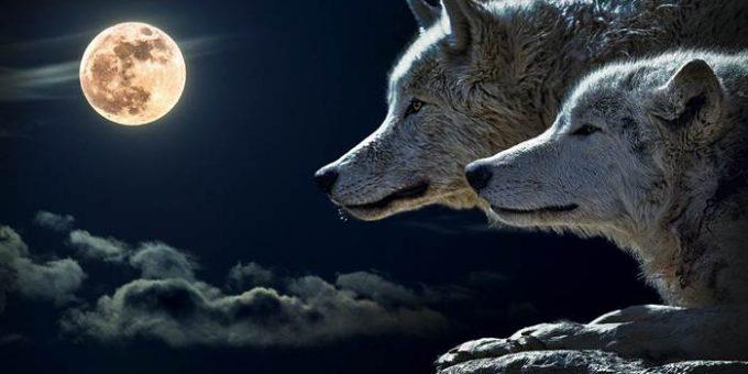 Полнолуние волки