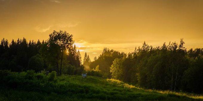 Закат в лесу фото