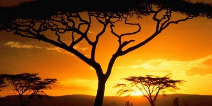 Путешествие на остров Мадагаскар