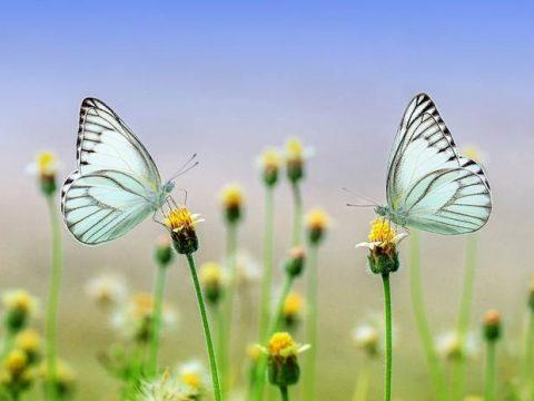 Бабочки весной