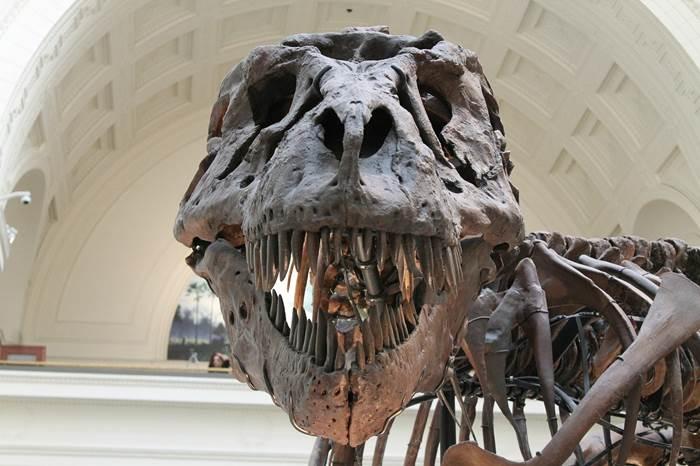 Тираннозавр кости динозавра