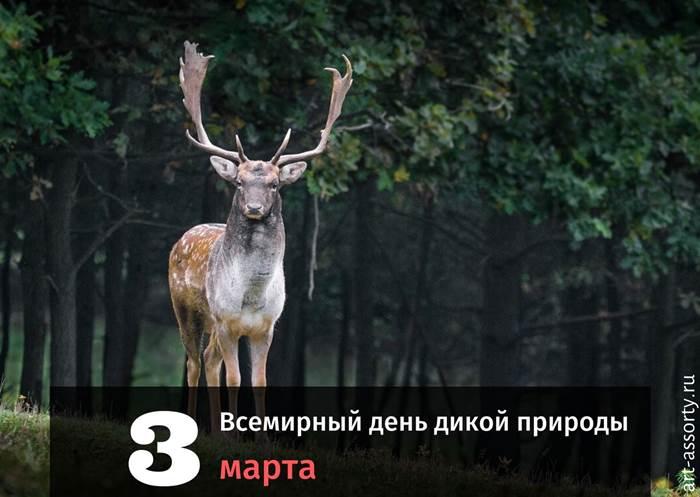 Всемирный день дикой природы картинка