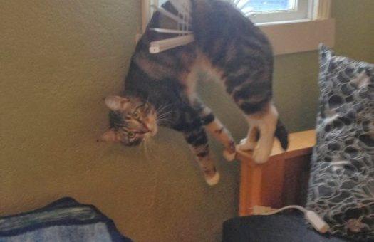 Невезучие кошки (смешные фото)
