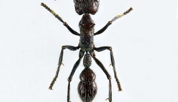 Самые опасные насекомые фото