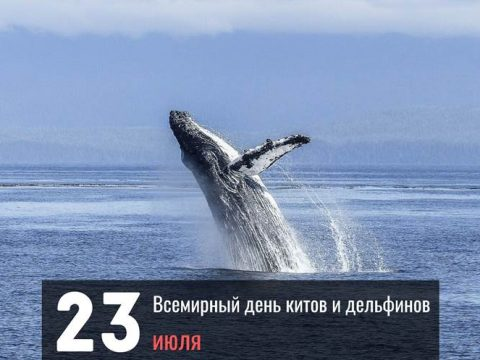 Всемирный день китов и дельфинов поздравление