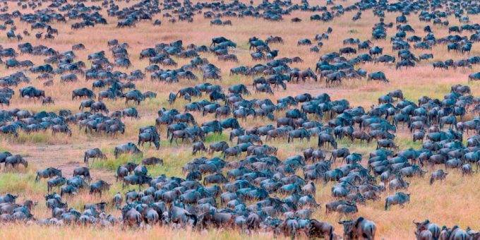 Сможете ли вы найти зебру на этой фотографии?