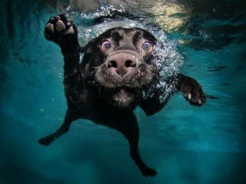 Собака под водой