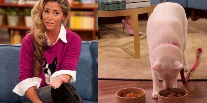 Собака, которую все считали вегетарианкой, предпочла овощам мясо в прямом эфире
