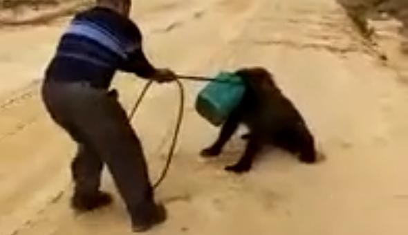 В Якутии ищут медведя с канистрой на голове видео