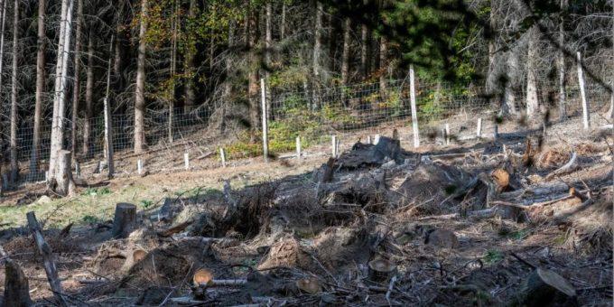 Сможете ли вы найти на фото спрятавшегося оленёнка?