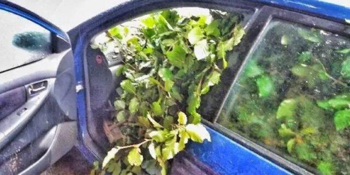 Полиция остановила автомобиль, который был полностью забит ветвями деревьев