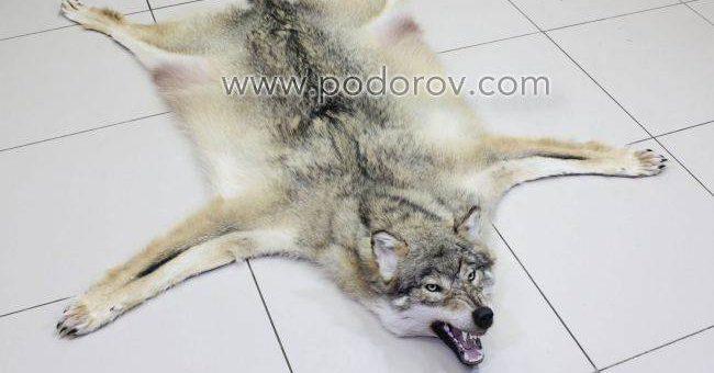 Шкуры волка в мастерской Подорова